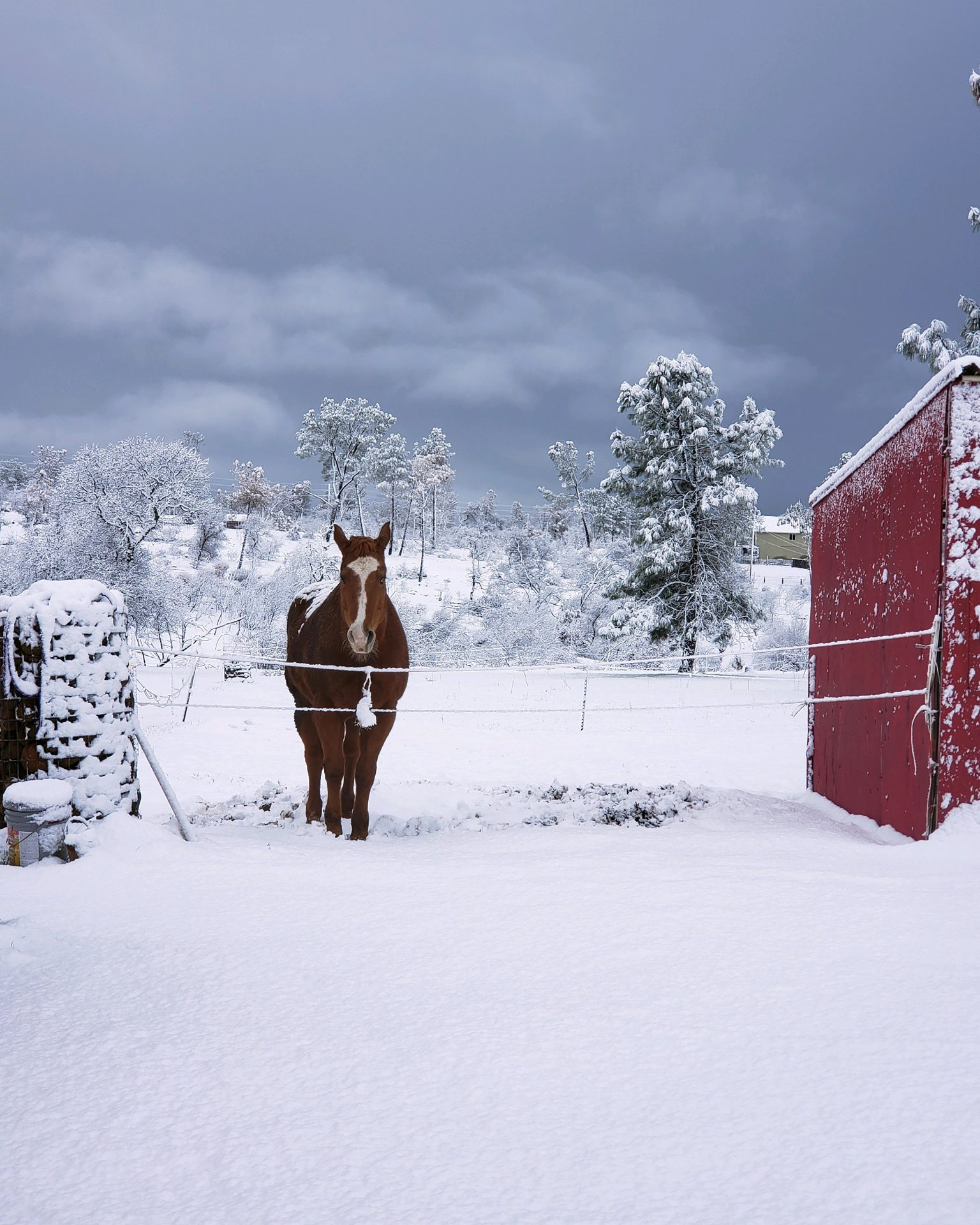 Pic special-project-horse-in-snow