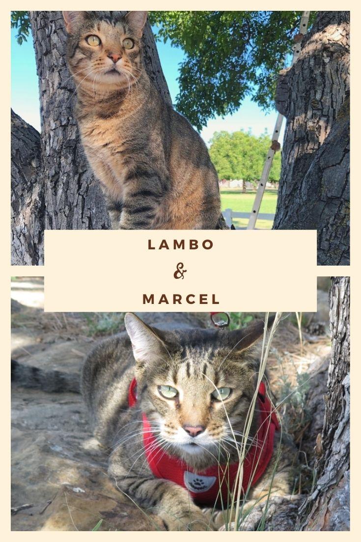 lambo and marcel